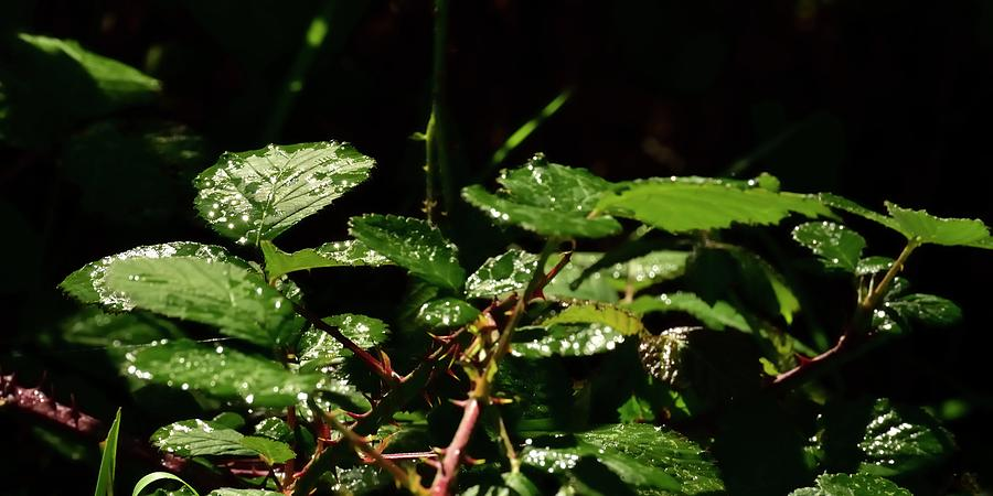 Raindrops On Leaves by Jerry Sodorff
