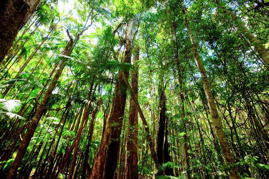 Rainforest Photograph by Djgunner