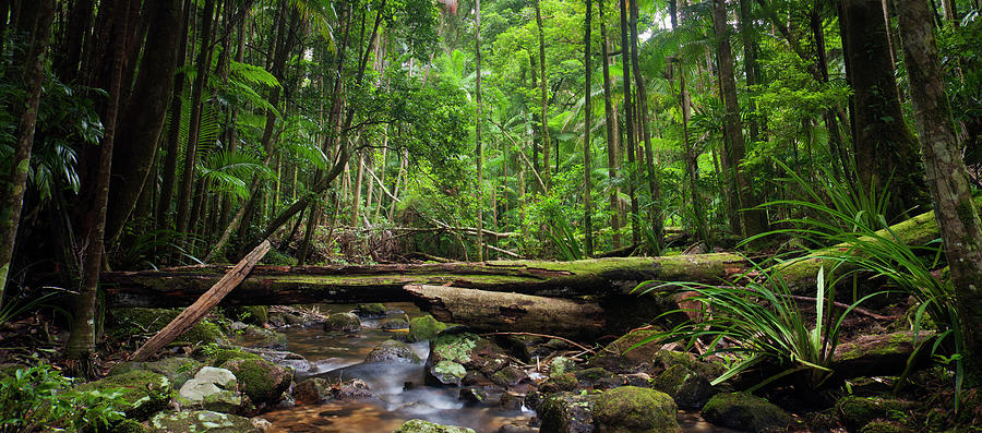 Rainforest Stream Panorama Photograph by Davidf