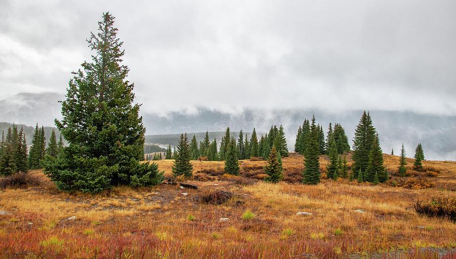 Rainy Day at Molas Pass by Gordon Ripley