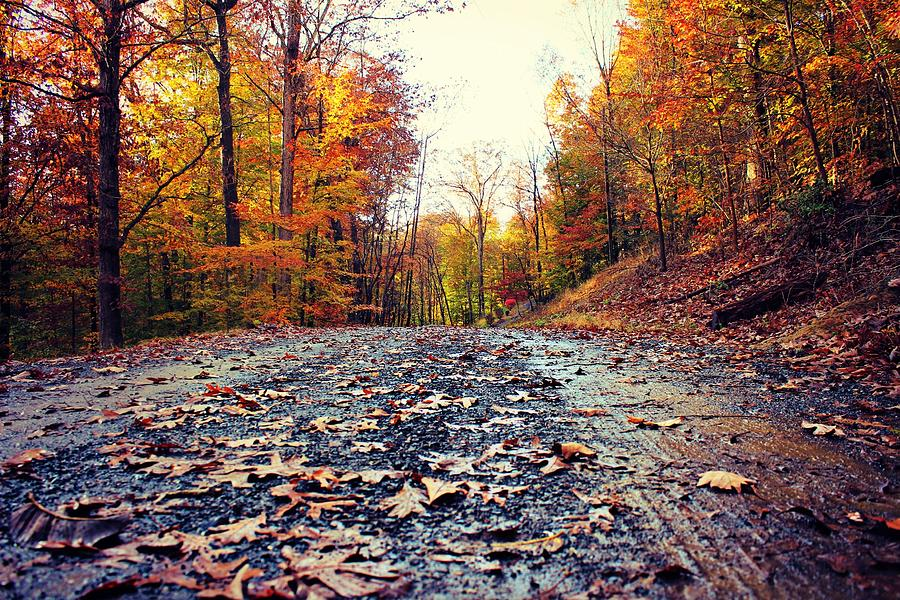 Rain Photograph - Rainy Fall Roads by Candice Trimble