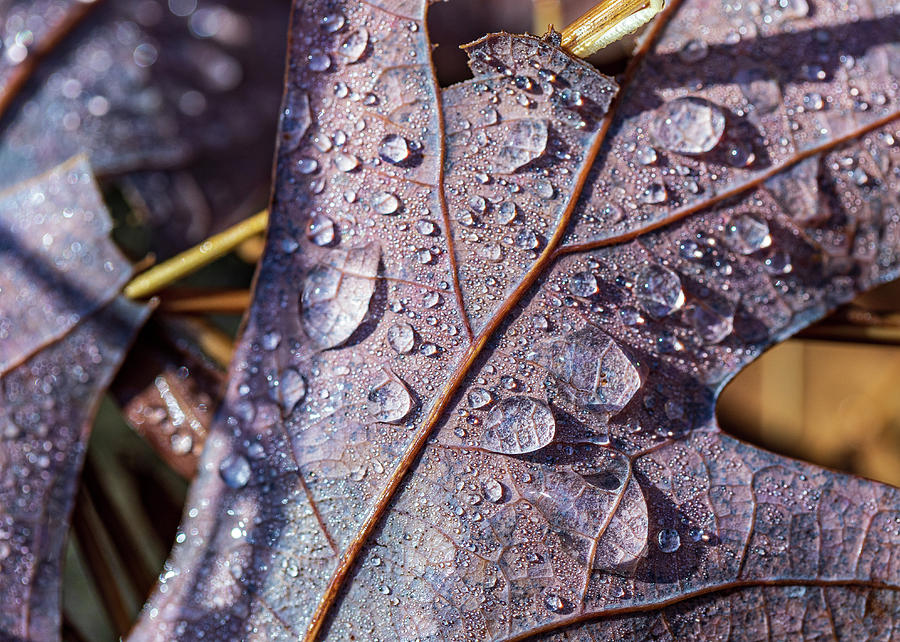 Rainy Halloween by Amelia Pearn