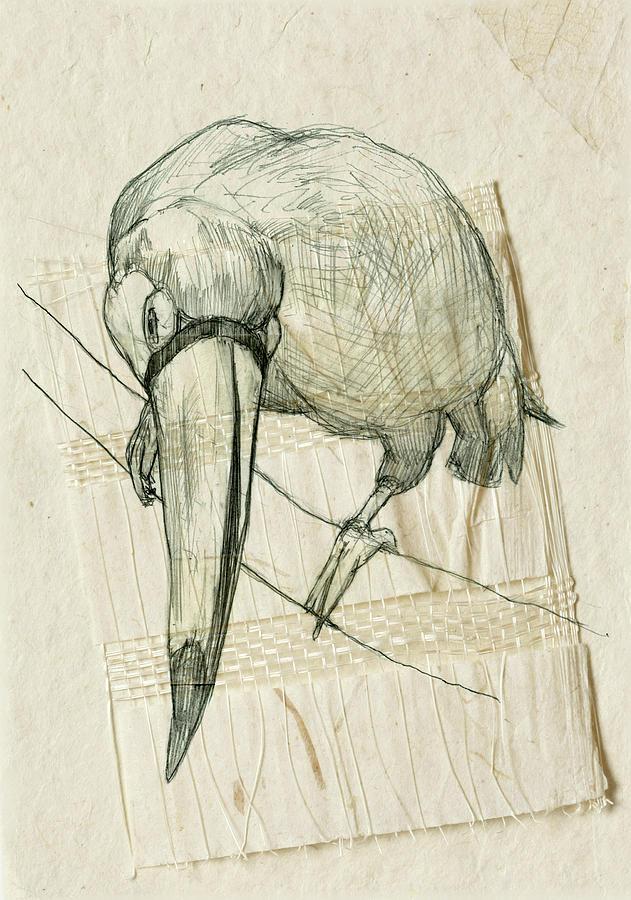 Bird Drawing - Ramphastidae by Merry Art