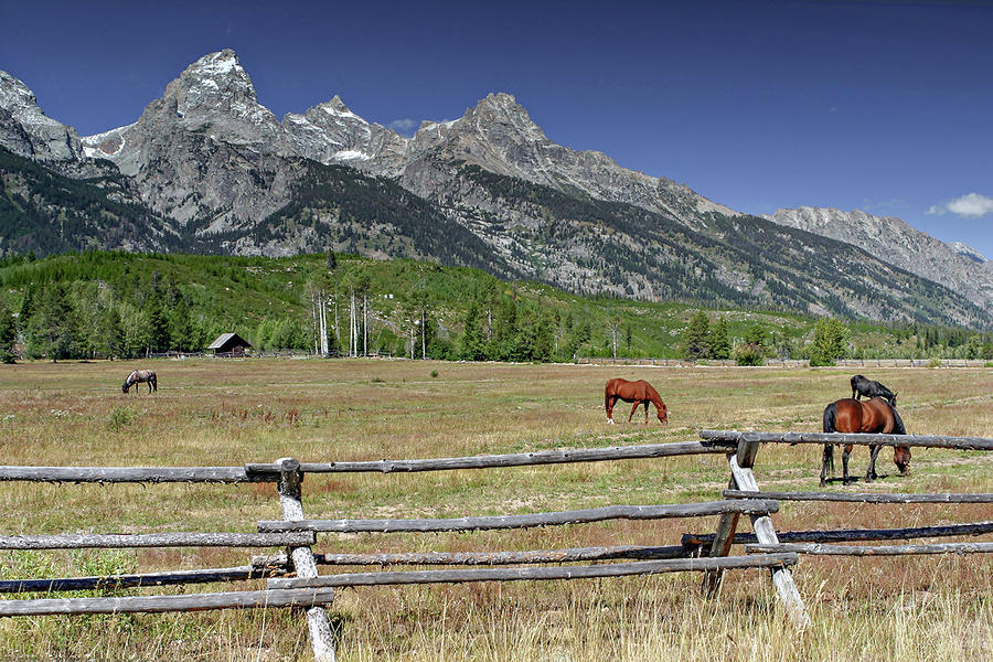 Ranch Life by Ronnie and Frances Howard
