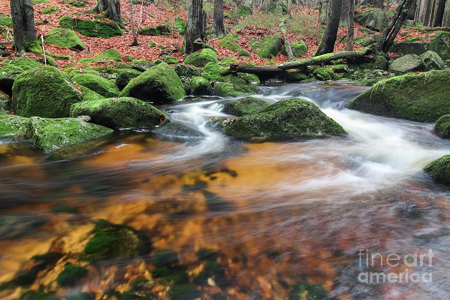 Rapid Photograph - Rapids On Jedlova Brook, Jizera Mountains,  Czech Republic by Michal Boubin