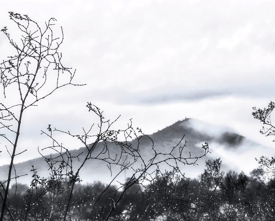 Rare Desert Fog in Winter by Judy Kennedy