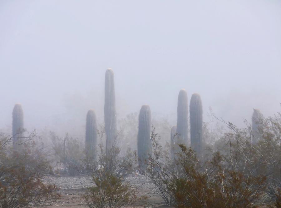 Rare Desert Fog by Judy Kennedy