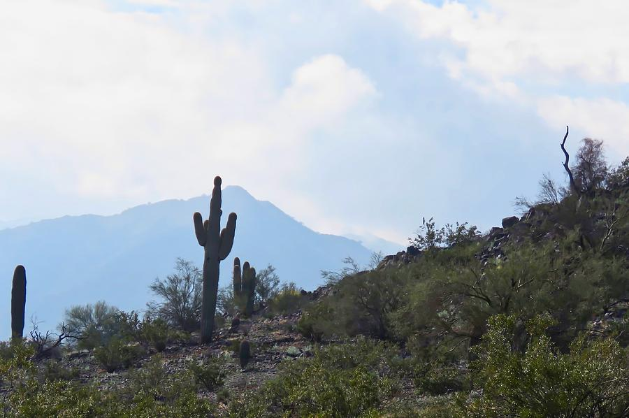 Rare Fog Lifting in the Desert by Judy Kennedy