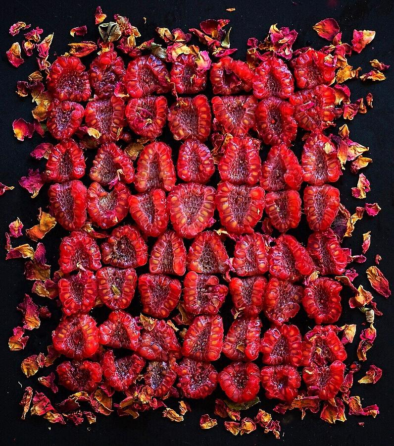 Raspberry Red Grid by Sarah Phillips