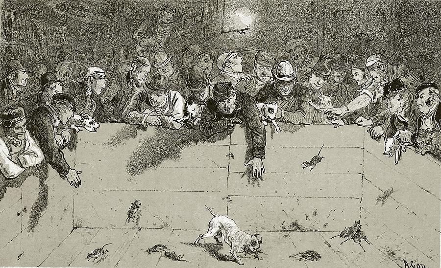 Rat-catching Digital Art by Rischgitz