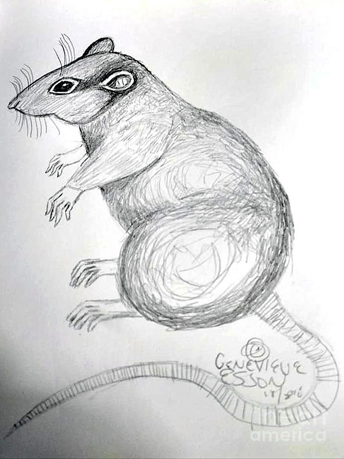 rat Drawing