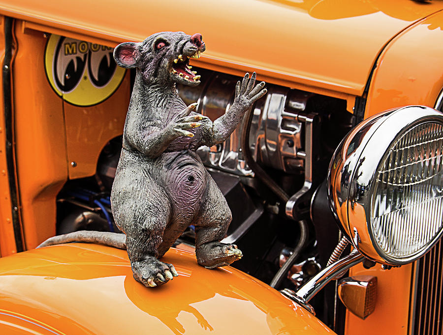 Rat on Fender by Ron Roberts