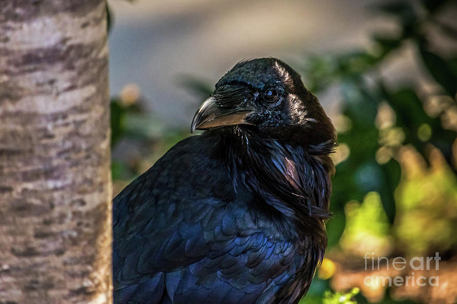 Raven Watching by Kate Brown