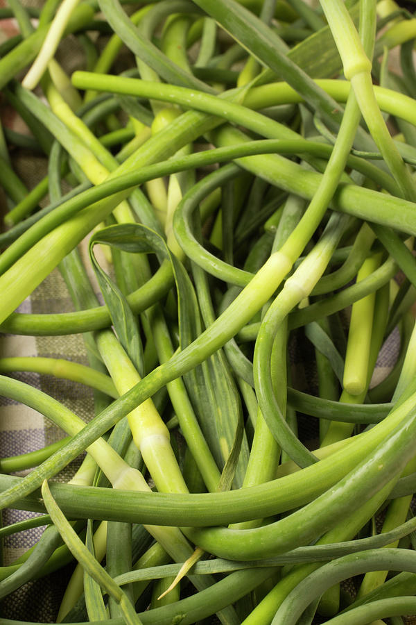 Raw Garlic Scapes Photograph by Brian Yarvin
