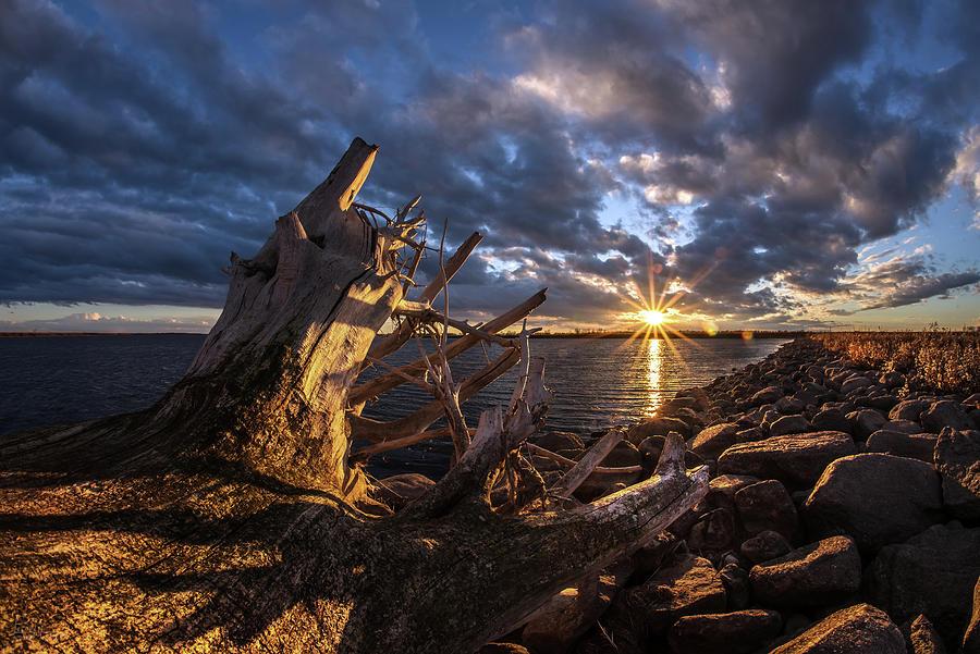 Devils Lake Nd >> Devils Lake Driftwood North Dakota Photograph By Peter Herman