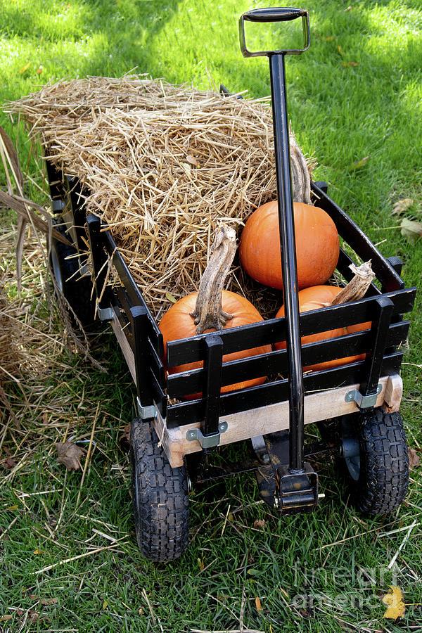 Ready for Halloween by Ann Horn