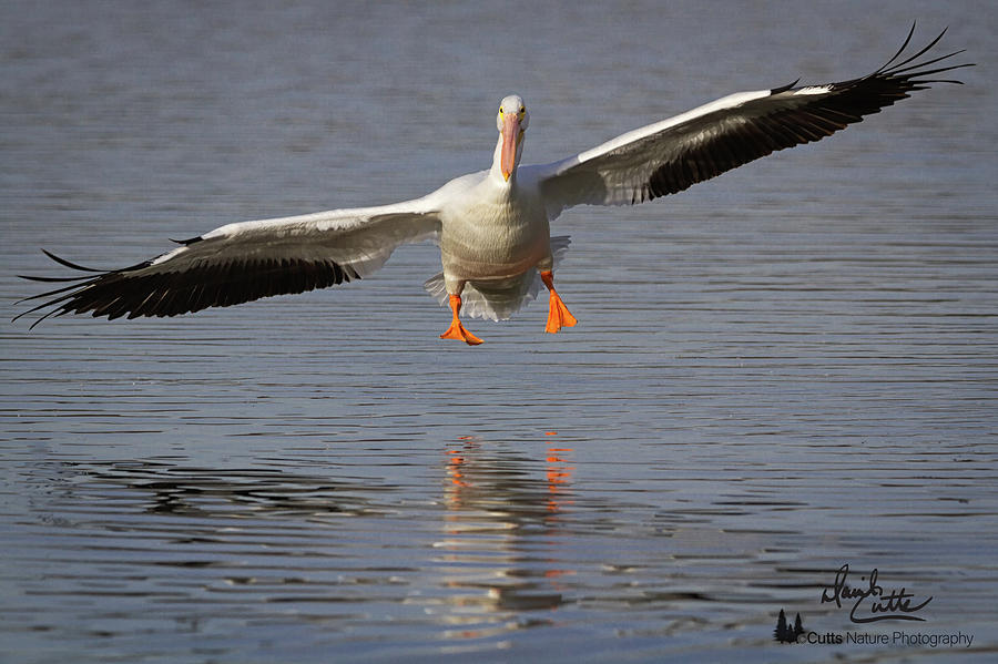 American Photograph - Ready For Landing by David Cutts