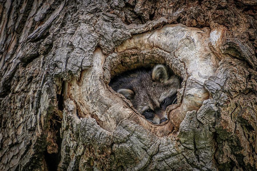 Wildlife Photograph - Ready For Nightfall by Christopher Thomas