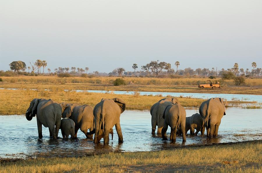 Rear View Of African Elephant Loxodonta Photograph by Daryl Balfour