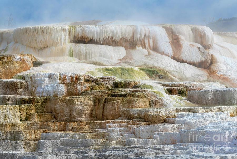 Rebirth - Mammoth Hot Springs by Sandra Bronstein