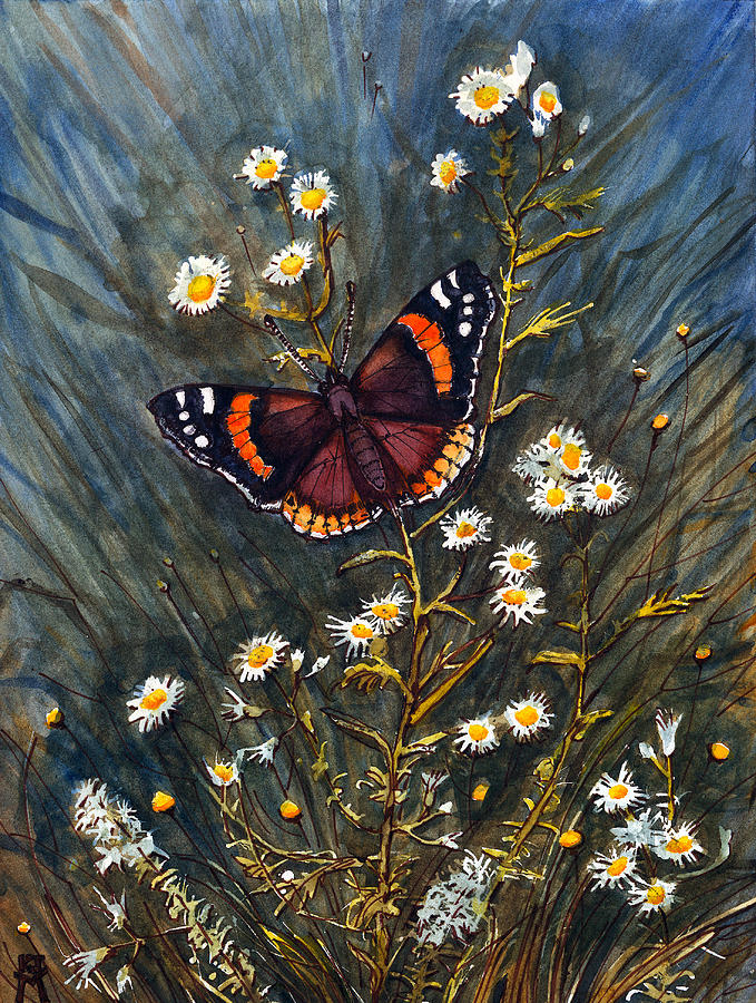 Red Admiral Butterfly Painting - Red Admiral And Wild Aster by Katherine Miller