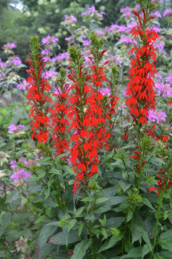 Red and Lavender Wildflowers Vertical by Aimee L Maher ALM GALLERY