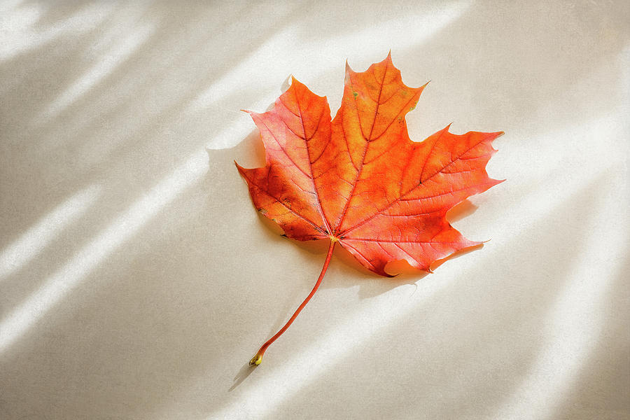 Red And Orange Maple Leaf Photograph