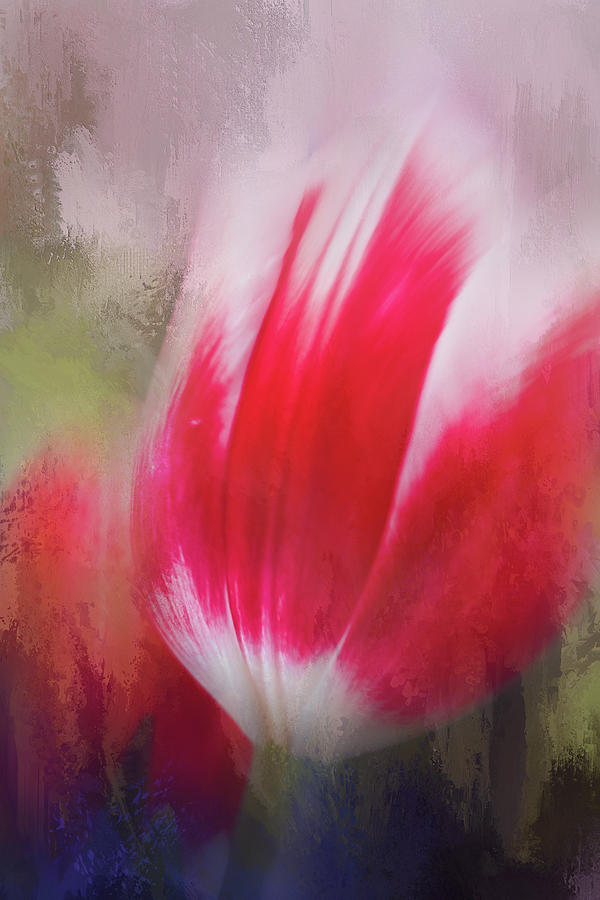 Red and White Tulip by K Powers Photography