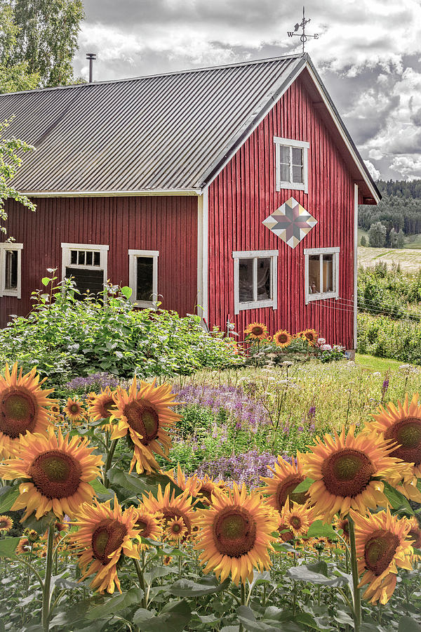 Barn Photograph - Red Barn In Summer Country Sunflowers by Debra and Dave Vanderlaan