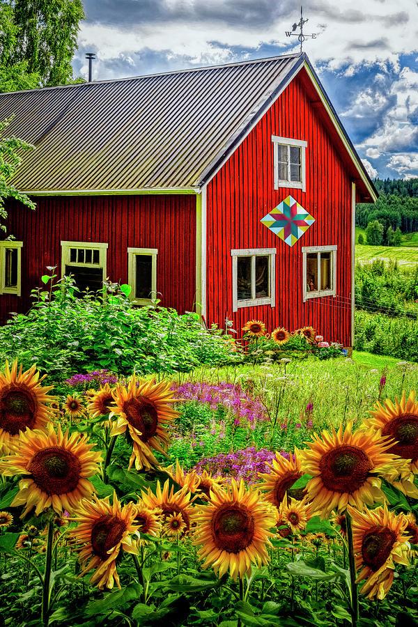 Red Barn in Summer Sunflowers by Debra and Dave Vanderlaan