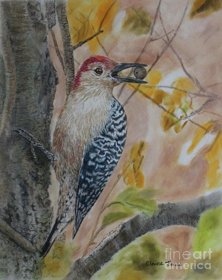 Red-Bellied Woodpecker by Elaine Jones