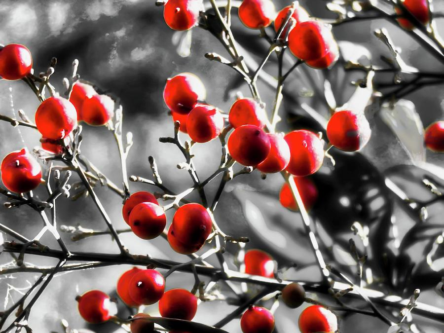 Arizona Photograph - Red Berries In The Desert by Judy Kennedy