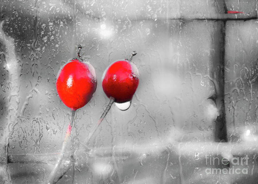 Red Berries on a Rainy Day in Glasgow by Hal Halli