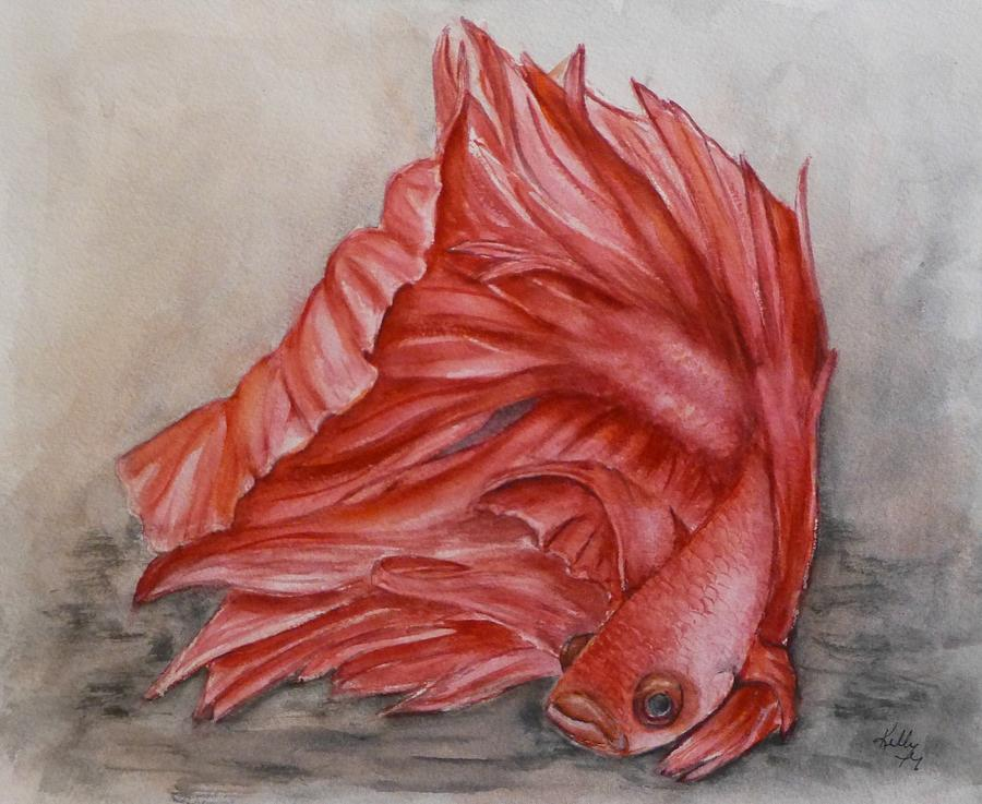 Red Betta Fighting Fish by Kelly Mills
