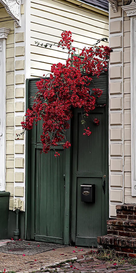 Red Bougainvillea Over Green Door by Debi Dalio