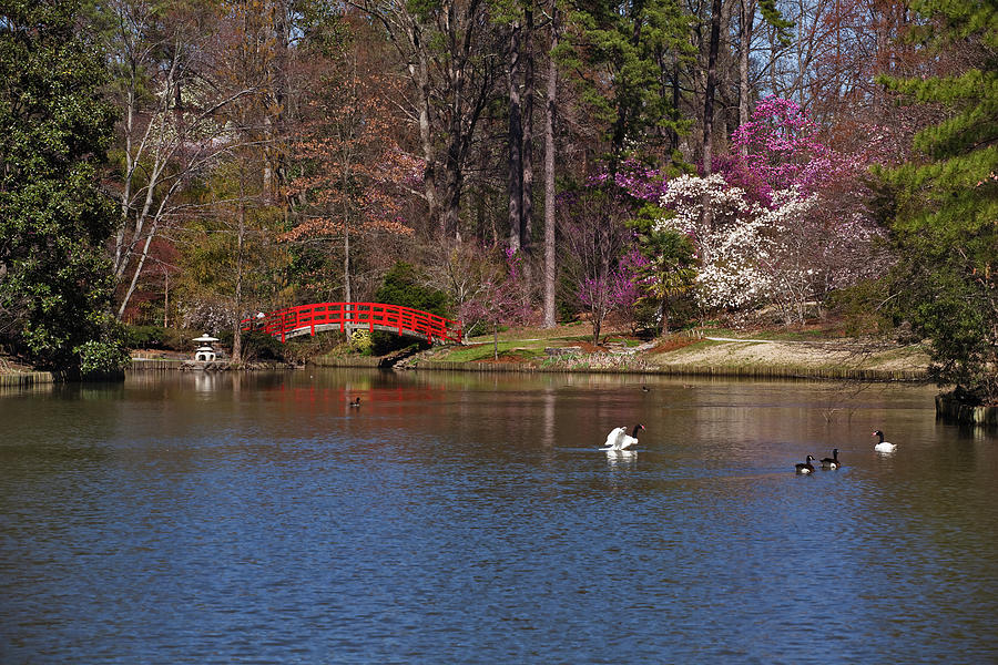 Red Bridge In Japanese Garden Photograph by Red moon rise