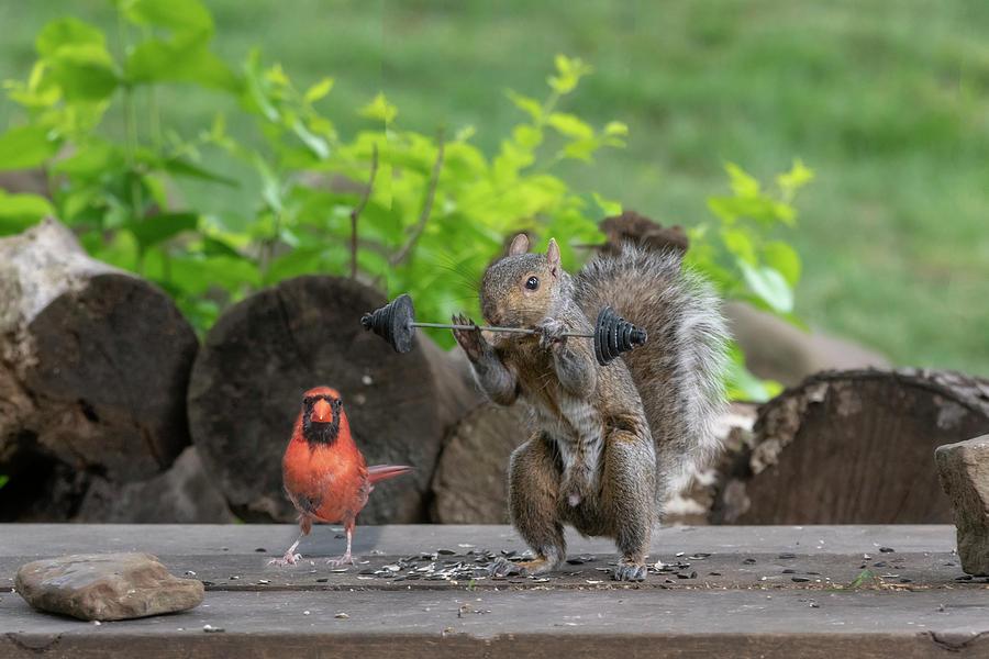 Red cardinal helping train his buddy by Dan Friend