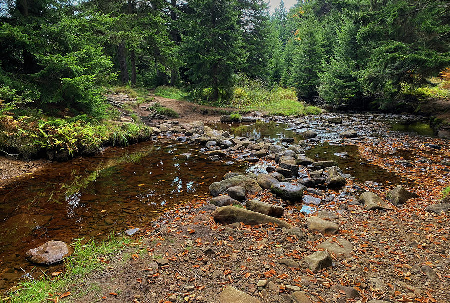 Red Creek in Dolly Sods by Lori Coleman