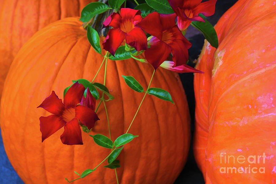 Red Cypress Vine and Pumpkins by Diana Mary Sharpton