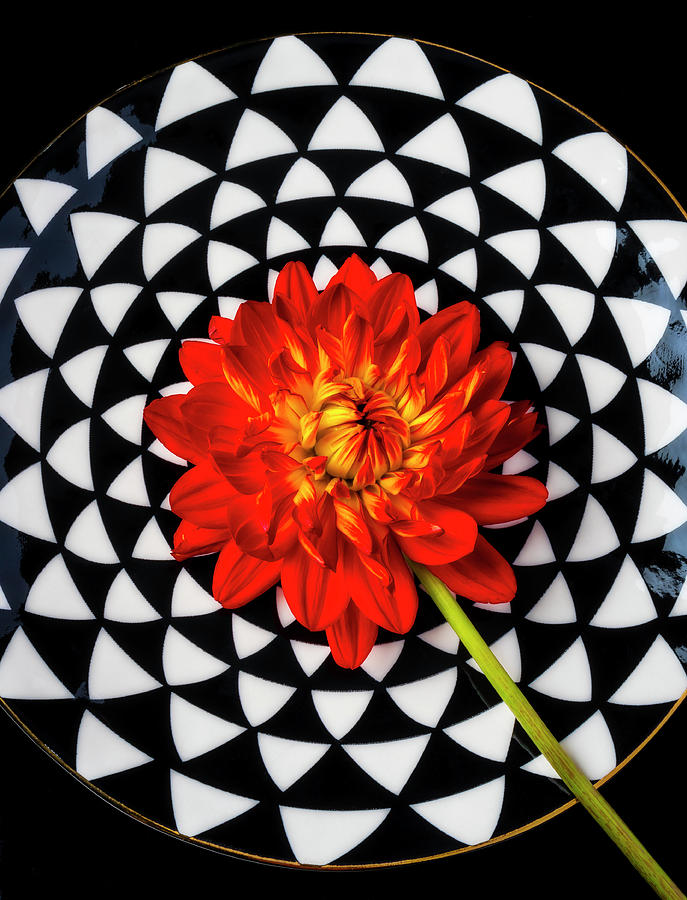 Red Dahlia On Graphic Plate by Garry Gay