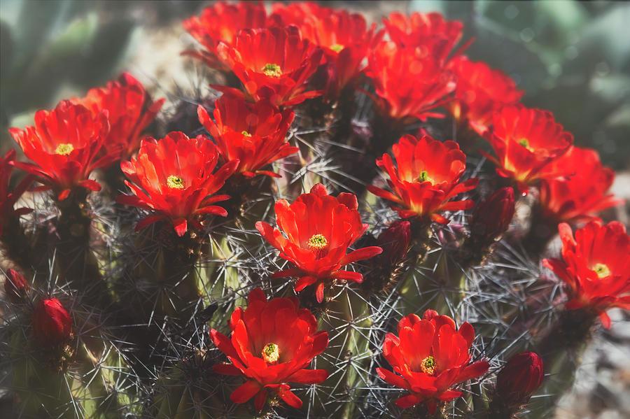 Red Desert Beauty  by Saija Lehtonen