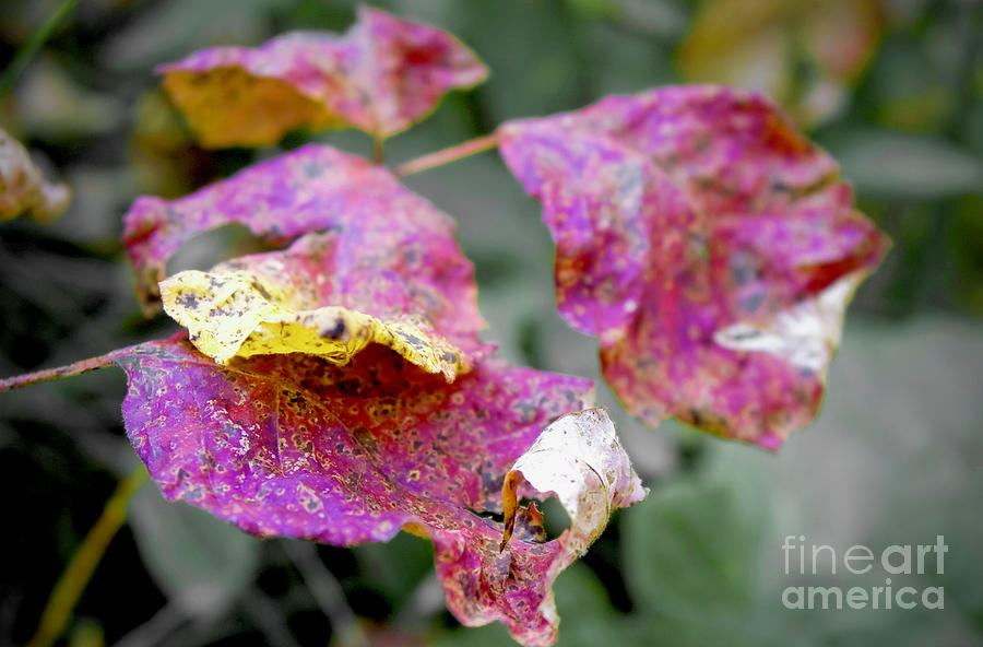 Red Fall Leaves by Bob Mintie