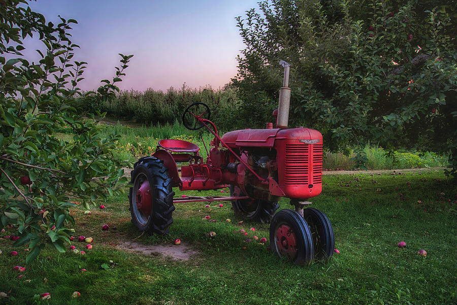 Red Farmall Tractor by Joann Vitali
