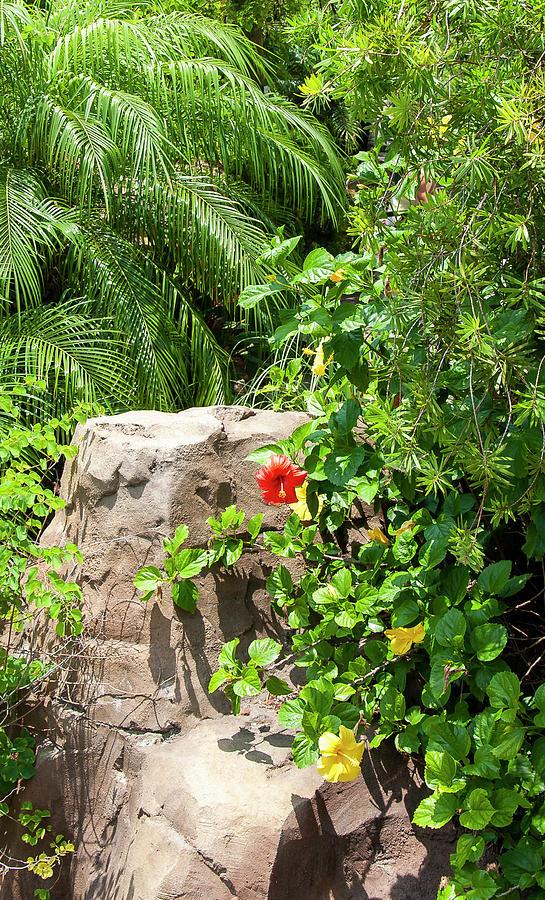 Red flower in Garden by Gene Bollig