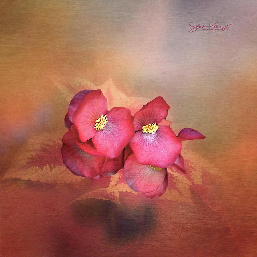 Red Flower by Steve Kelley