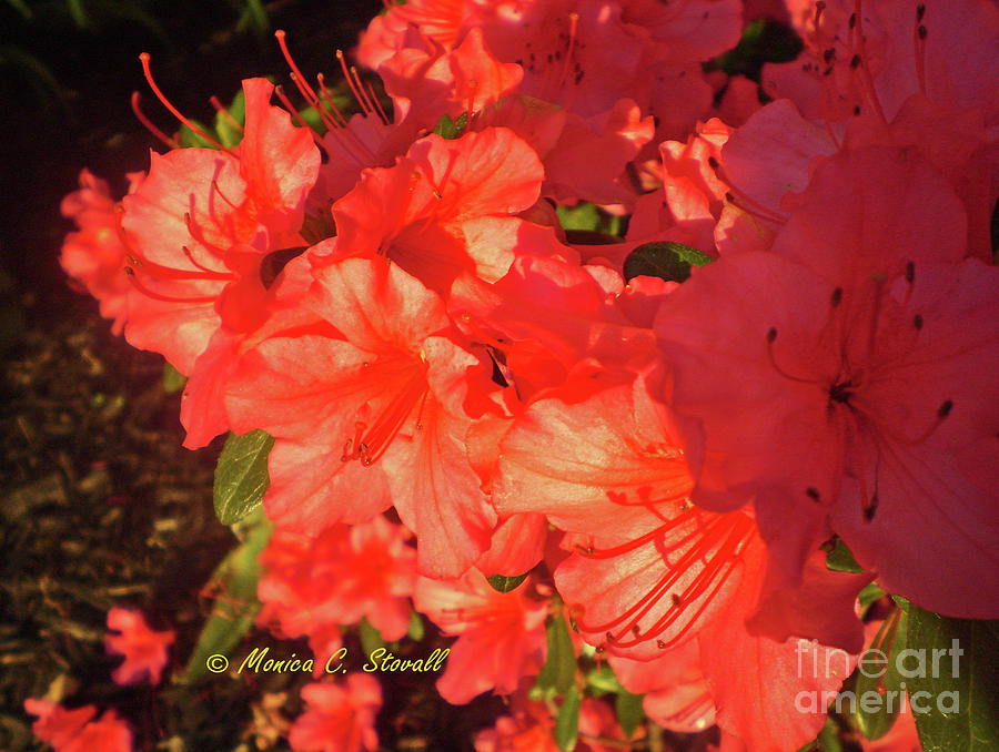 Red Flowers No. R13 by Monica C Stovall