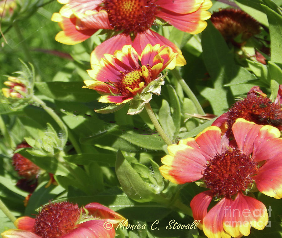 Red Flowers No. R15 by Monica C Stovall