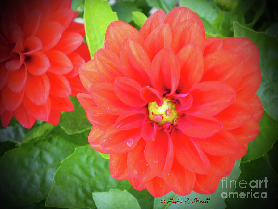 Red Flowers No. R18 by Monica C Stovall