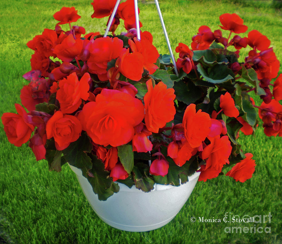 Red Flowers No. R20 by Monica C Stovall