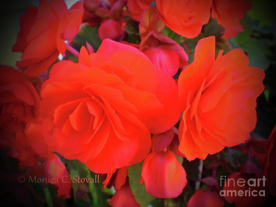 Red Flowers No. R21 by Monica C Stovall